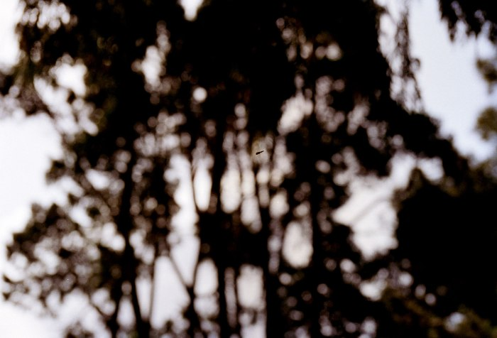 Flue i skogen 3, foto 60×90 cm, 2003