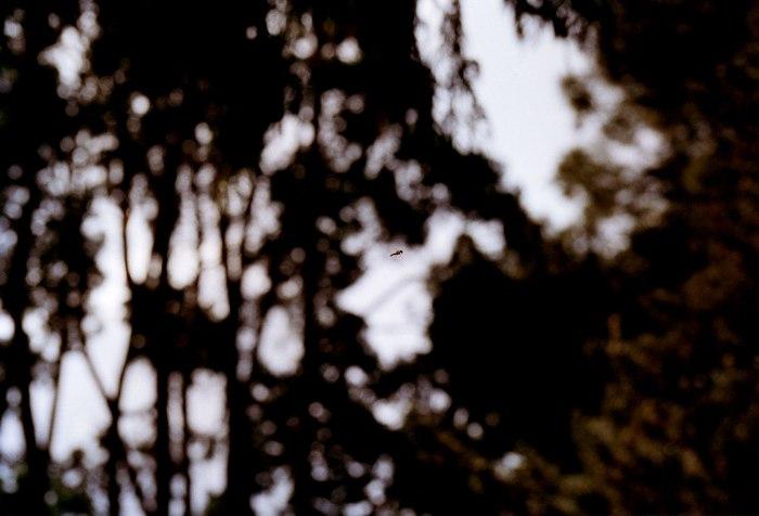Flue i skogen 1, foto 60×90 cm, 2003